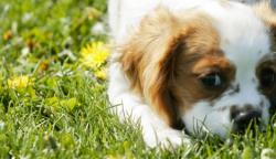 Nejlevnější granule pro psy u MALLu – slevy a doprava zdarma