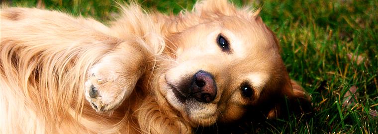 TIP: Granule pro psy v akci – slevy až 42% a doprava zdarma